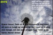 Salme5