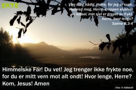Salme6