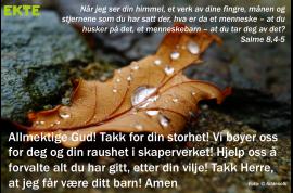 Salme8
